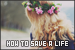 The Fray: How to Save a Life:
