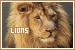 Lions: