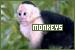Monkeys: