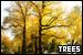 Trees: