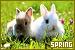 Season: Spring: