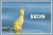 Ducks: